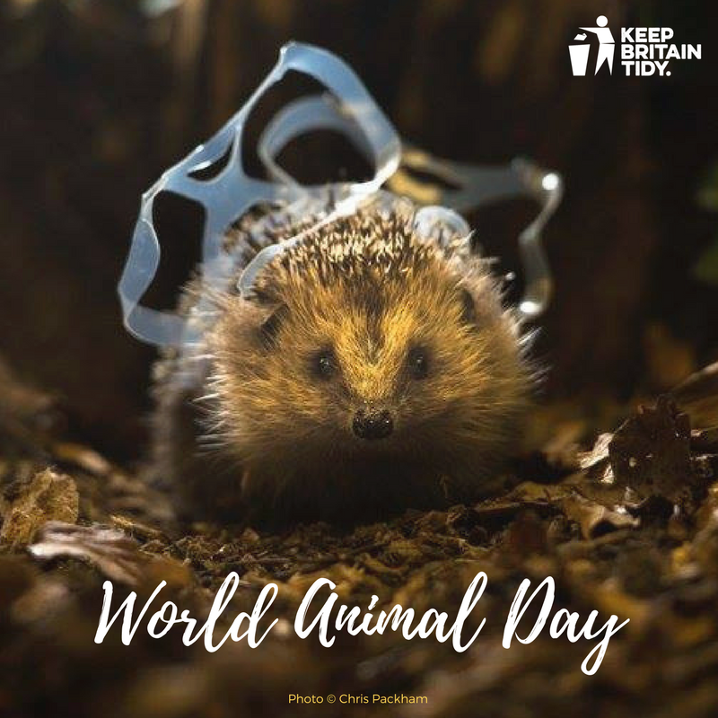 Help protect wildlife from harmful #litter, please dispose of your rubbish responsibly. #WorldAnimalDay https://t.co/YKXiUUaLax