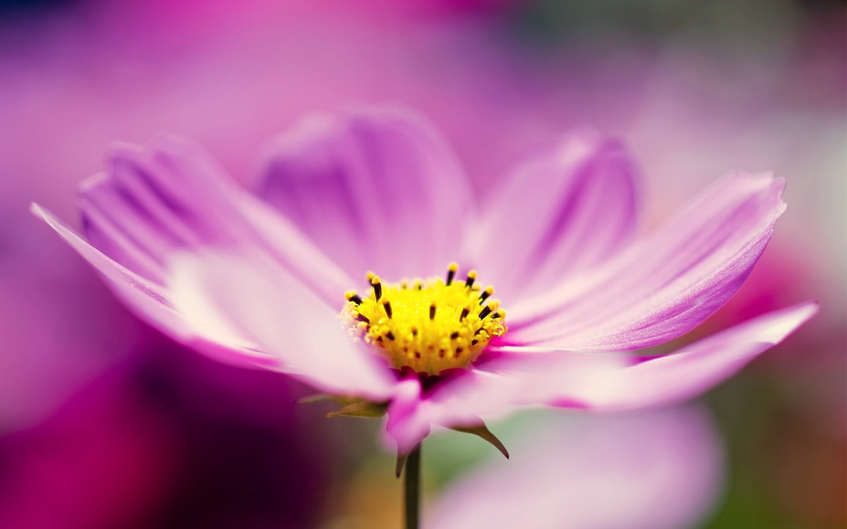 Humber nurseries ltd on twitter is your birthday in october humber nurseries ltd on twitter is your birthday in october cosmos and calendula are the birth flowers of this month october born people enjoy harmony izmirmasajfo