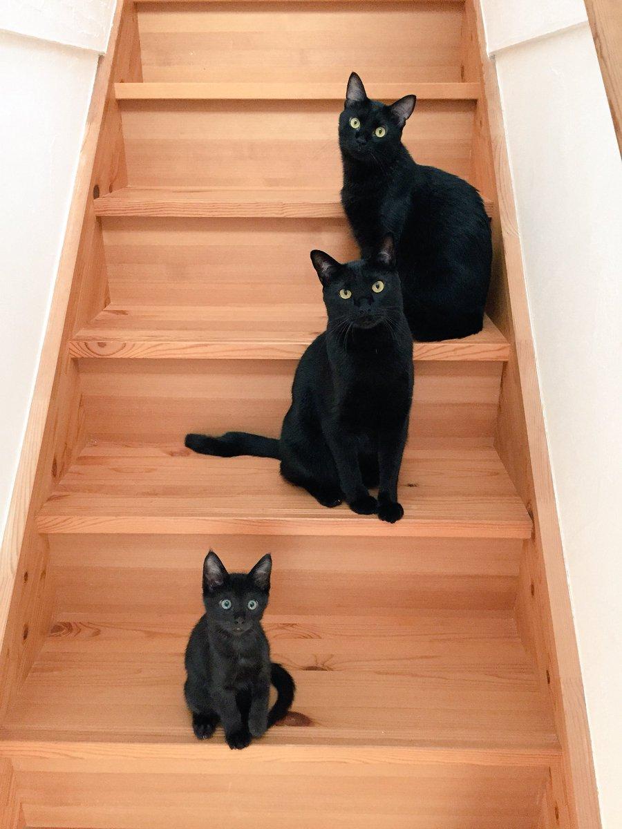 二階に行きたければ我々を倒してからだ… pic.twitter.com/jOqtPmUBEZ