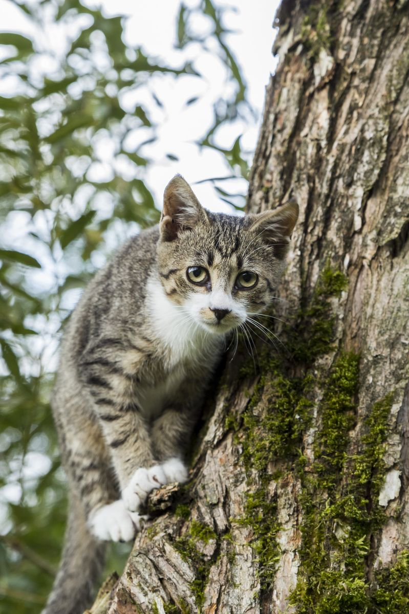 www. Wild mačička
