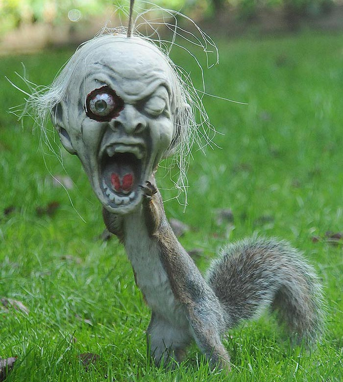 A squirrel got its head stuck in a Halloween decoration and ran around scaring the neighborhood #DemonSquirrel