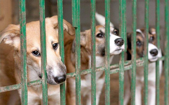 「その発想はなかった!」名古屋市が『ふるさと納税』で犬の殺処分ゼロ ⇒grapee.jp/399920  名古屋市の動物愛護センターが『ふるさと納税』の寄付金で、犬の殺処分ゼロを達成!2017年度は、猫も対象に殺処分ゼロを目指します!