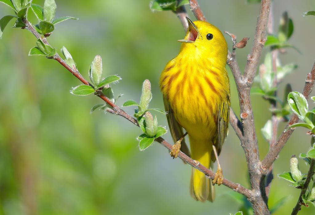 Картинки, пение птицы смешное