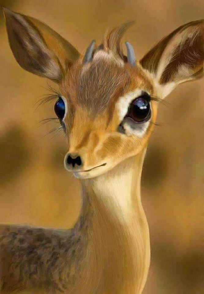 #dorcas gazelle hashtag on Twitter