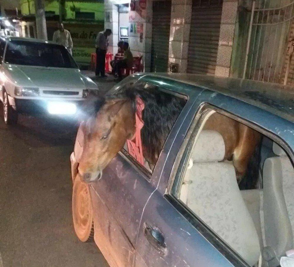 Homem embriagado é preso após levar pônei para 'passear' dentro de carro em MG https://t.co/9iUEgf9r4b #G1