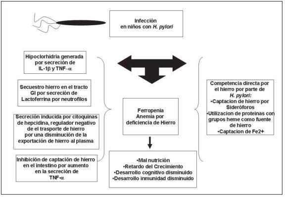 Anemia ferropenica en pediatria pdf