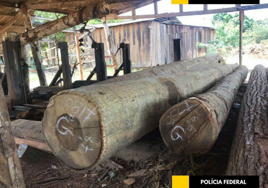 PF deflagra operação contra fraudes de quase R$ 1 bilhão em floresta Investigação no Paraná começou depois de um relatório do Ibama