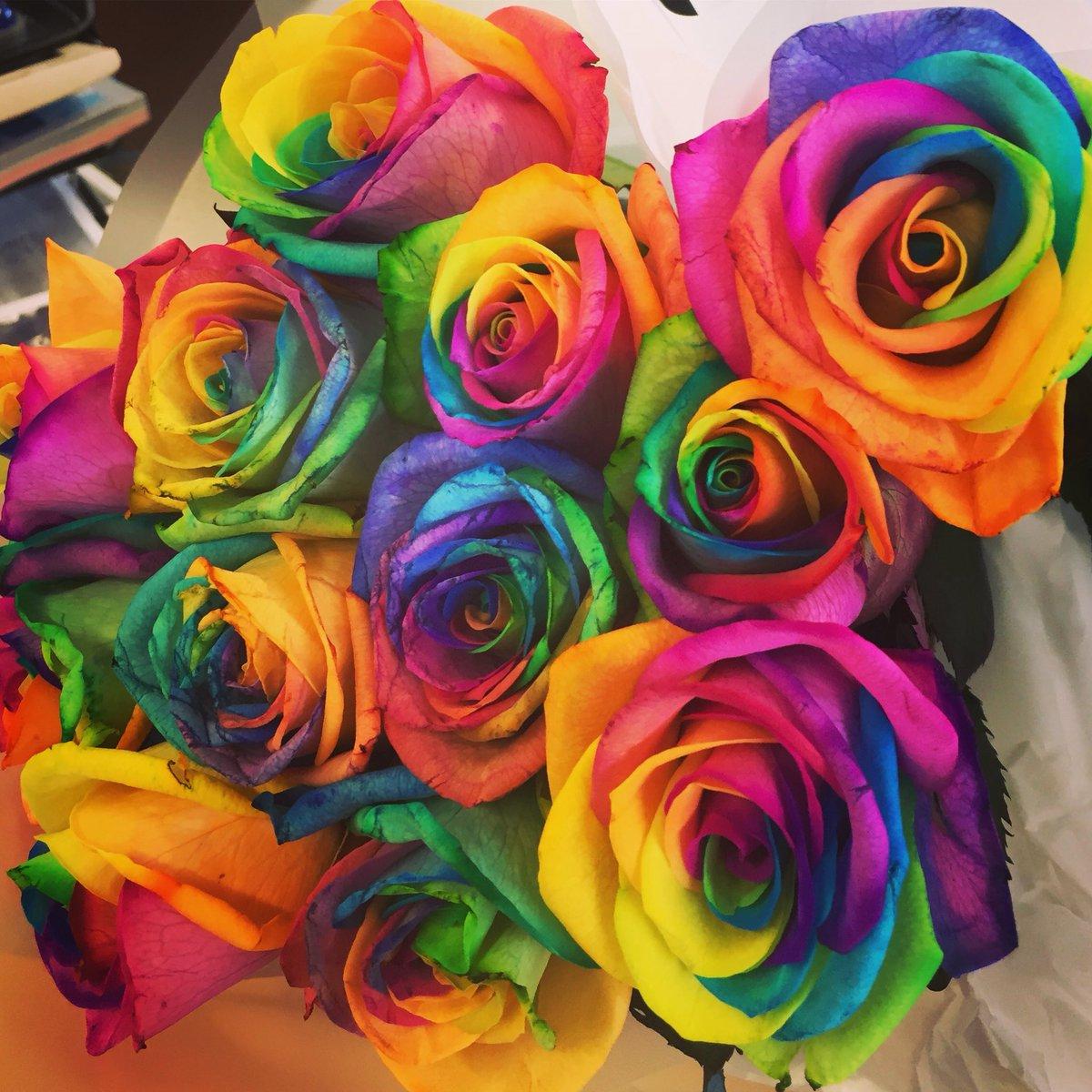 Justine Ablett On Twitter My Beautiful Rainbow Roses Beautiful