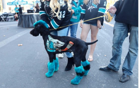 San Jose Fan Gives His Dog A Sharks Makeover