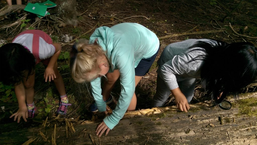 What's Living in a Hollow Log? The Grade 3/4 class ventured into the forest to investigate what sorts of creatures live in a hollow log.  We've learned that when a tree dies, it's not the end of the story....
