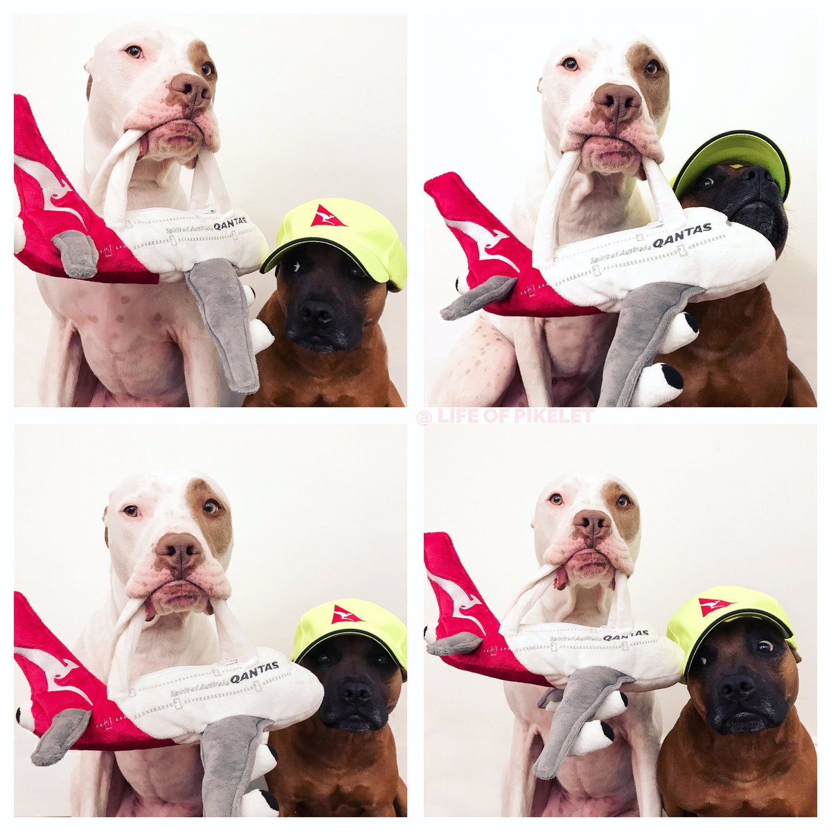 Qantas On Twitter These Pics Melted Our Hearts It Was Was Our