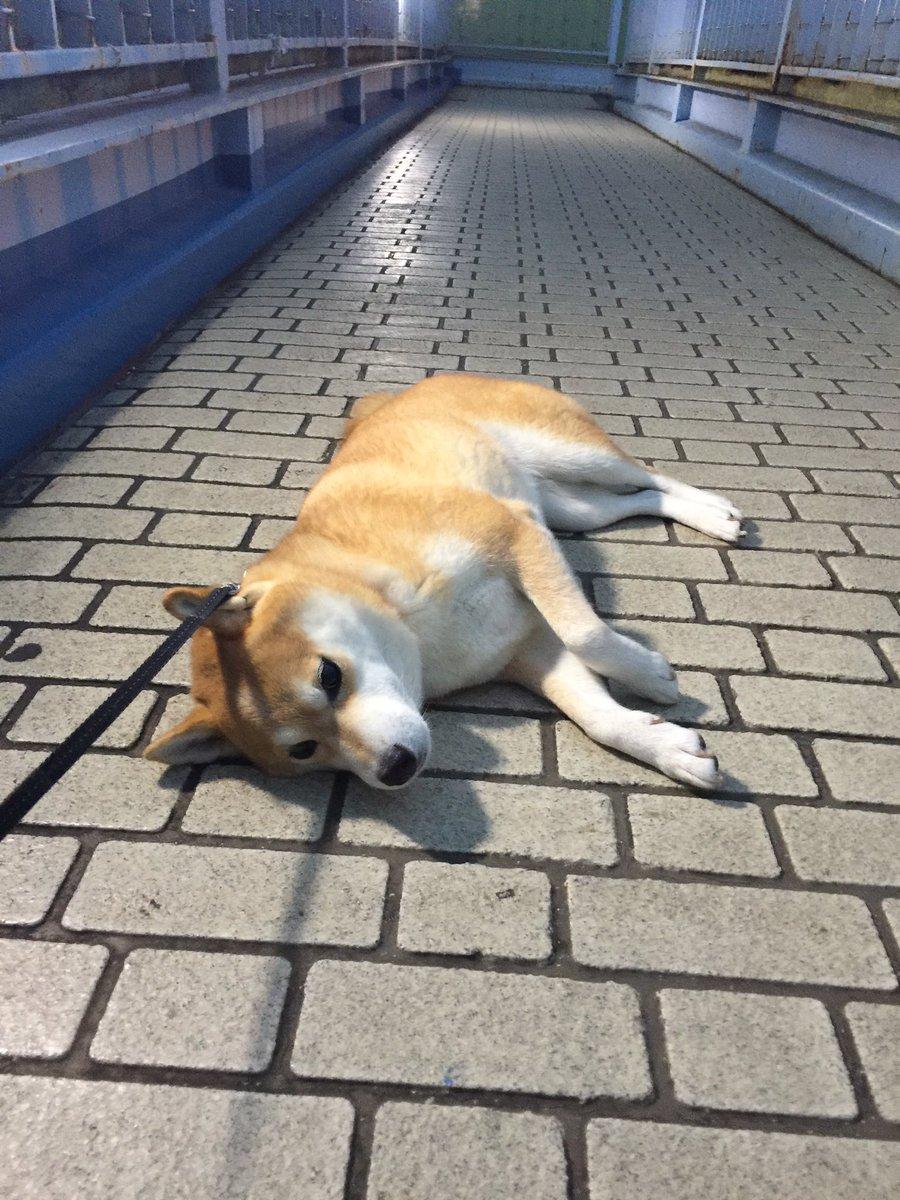 あと少しで散歩が終わることに絶望している犬です。