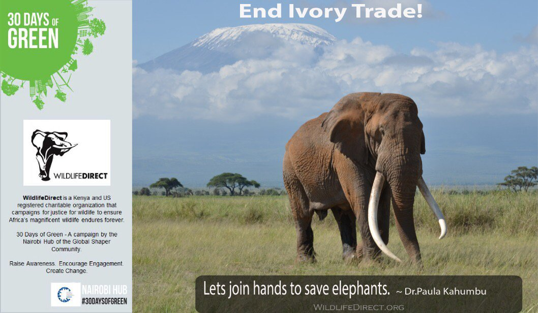 a discussion on saving elephants and ending ivory trafficking China is ending the country's legal ivory trade us confronts wildlife trafficking with ivory trade find this pin and more on only elephants need ivory by ifaw.