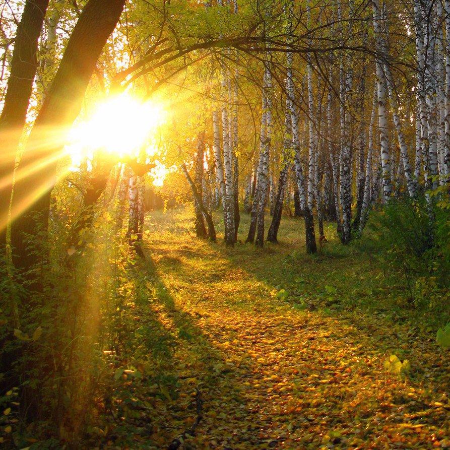 осеннее солнечное утро картинки втыкает землю