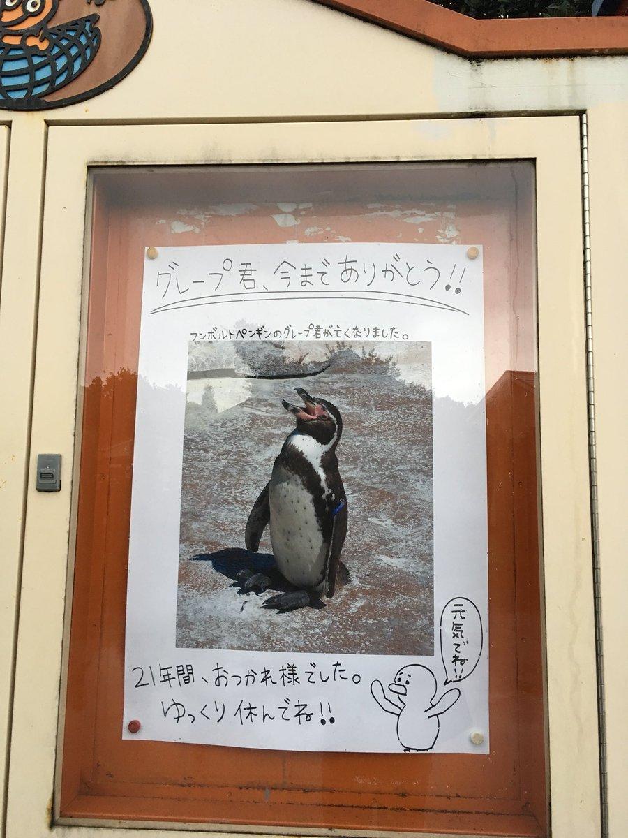 グレープ君の件について東武動物公園の正式告知(?)としては、ペンギン飼育場の近くの掲示板にてお知らせ…