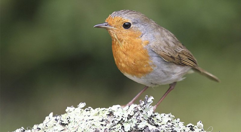 simple garden updates bbc on twitter bbcspringwatch explain a simple way to