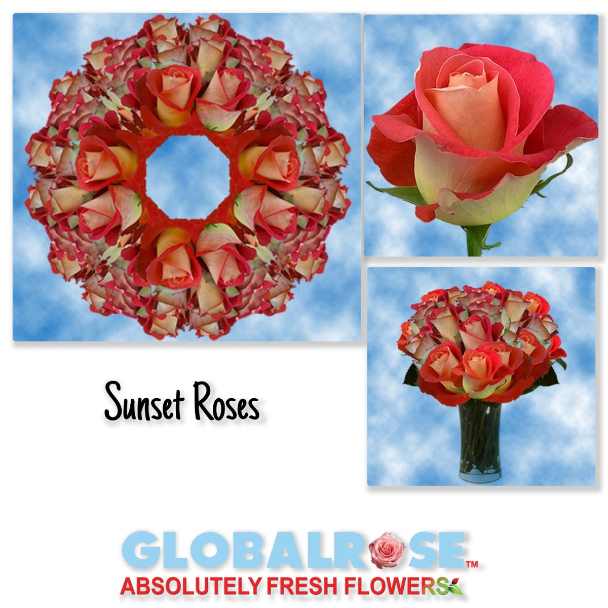 Global Rose On Twitter Beautiful Flowers And Their Meaning Visit