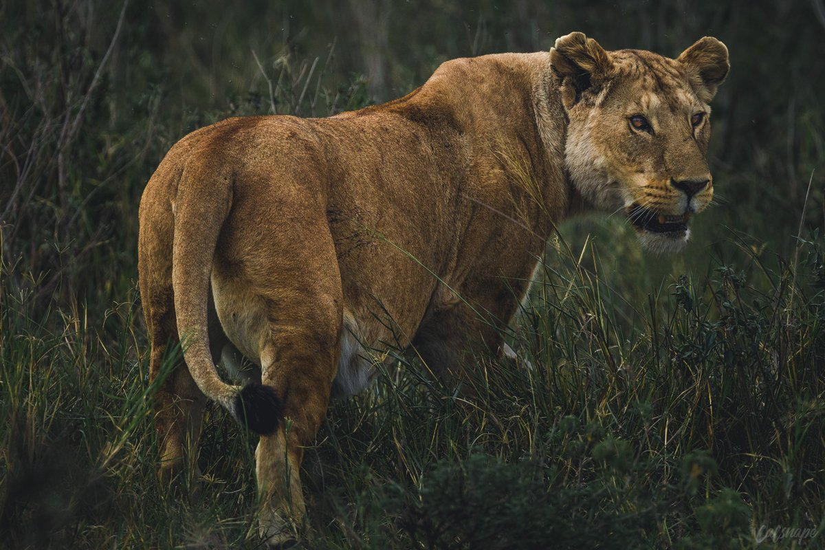 Callum Snape On Twitter Serengeti National Park Tanzania One - 9 things to see and do in serengeti national park