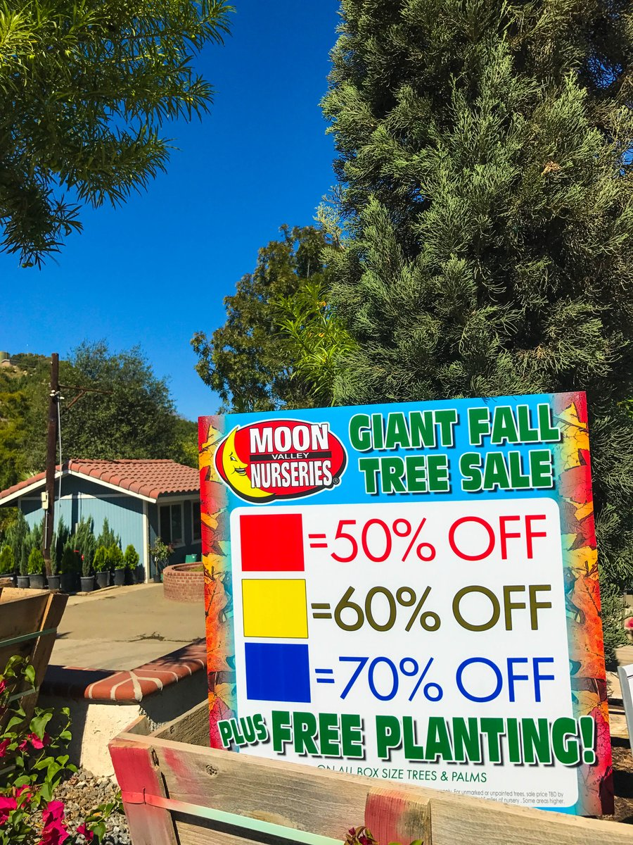 Moon Valley Nurseries On Twitter Looking To Add Immediate Privacy Shade And Increase The Property Value Of Your Home Shop Our Big Tree Sale Now And Get Up To 70 Off Https T Co Cnqtkwrljc