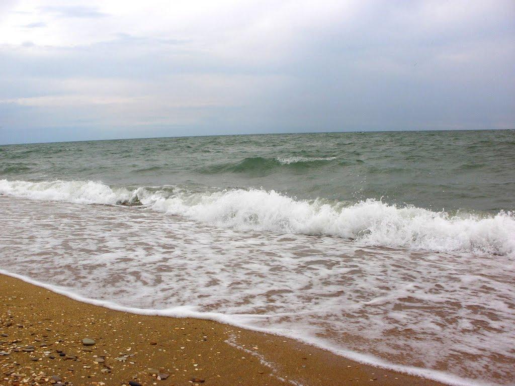 единственная каспийское море отдых фото кактусов