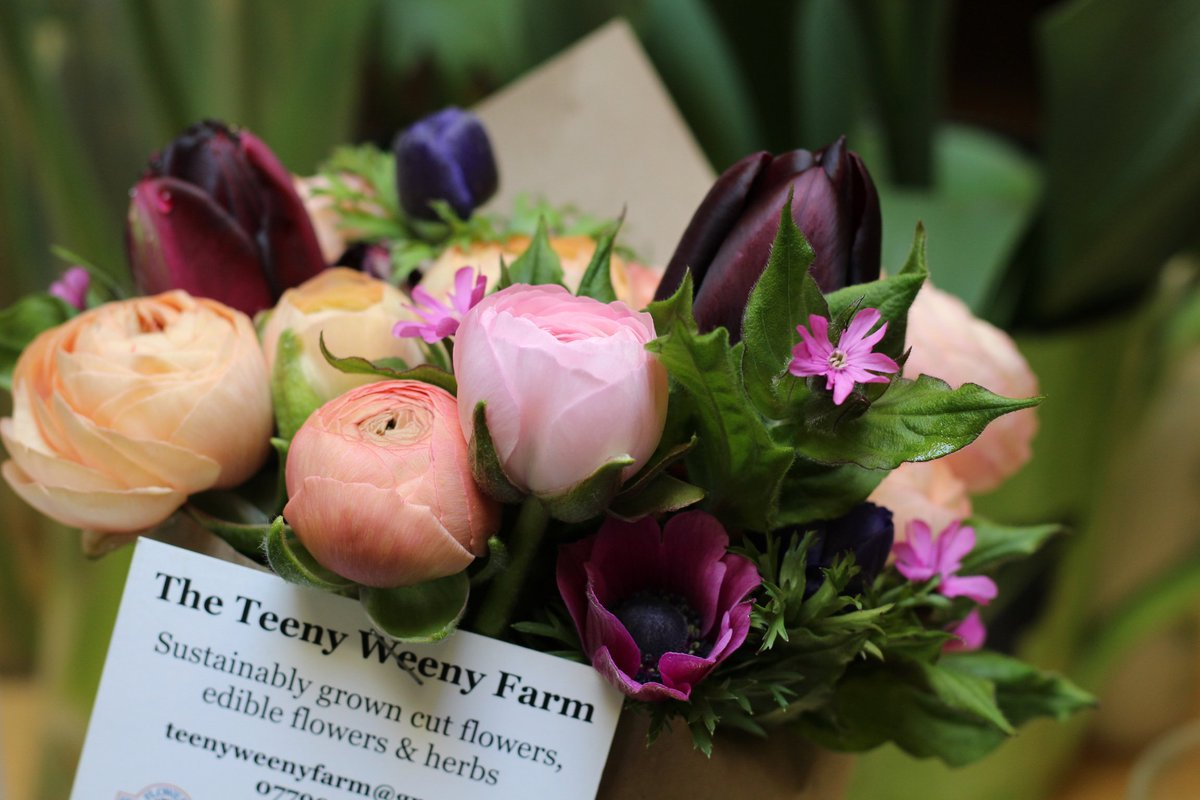 The teeny weeny farm on twitter 100s of anemone ranunculus corms the teeny weeny farm on twitter 100s of anemone ranunculus corms now soaked pre sprouting heres to more beautiful flowers come spring izmirmasajfo Images
