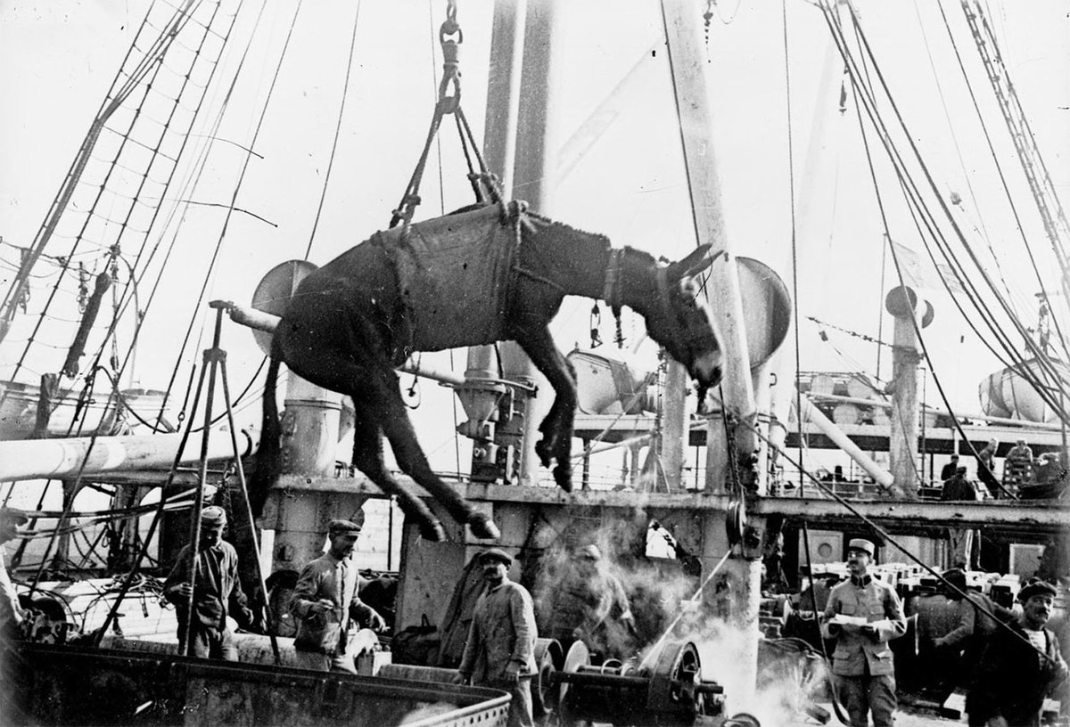 Image result for loading donkeys onto a ship ww1