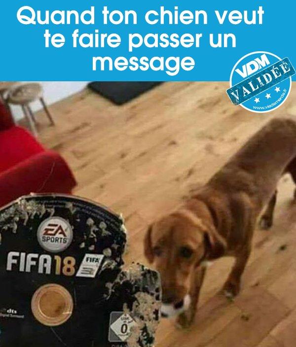Noopy déteste FIFA 😱 ⚽  #VDM #VDMphoto #viedemerde #FIFA18 #Noopy  https://t.co/qT5o1XPHNX