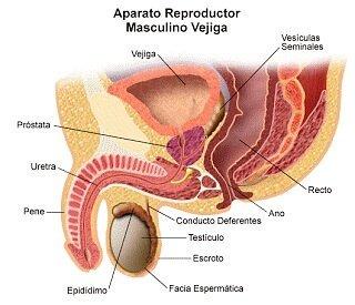 tumor maligno de prostata