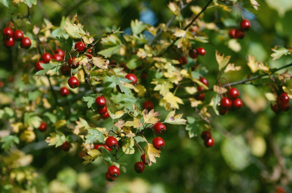 """BirdLife Luzern on Twitter """"Herbstarbeiten im Garten"""
