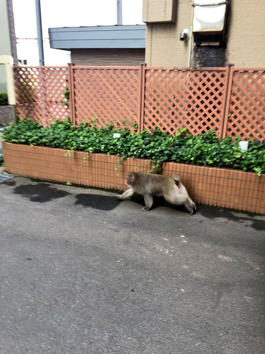 猿がいて目が覚めた