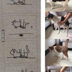 やはりあの理論は正しかった?犬は固体で猫は流動体の証拠が発見される!