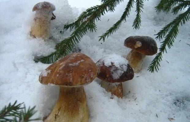 Шесть человек отравилось грибами на Львовщине - Цензор.НЕТ 8689