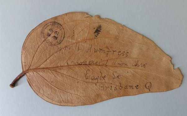Happy #WorldPostDay! This gum leaf letter was mailed to Brisbane in 1910. More on our blog - https://t.co/Ng67XB4oqu https://t.co/yZ8cMNm4hu