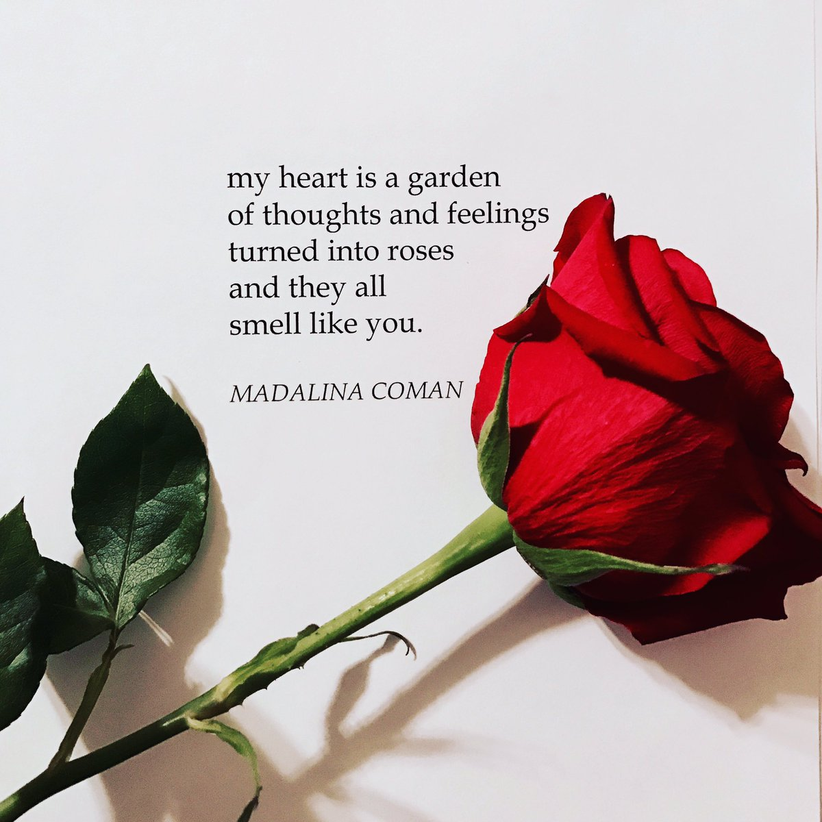 Madalina On Twitter My Heart Is A Garden Of Thoughts And