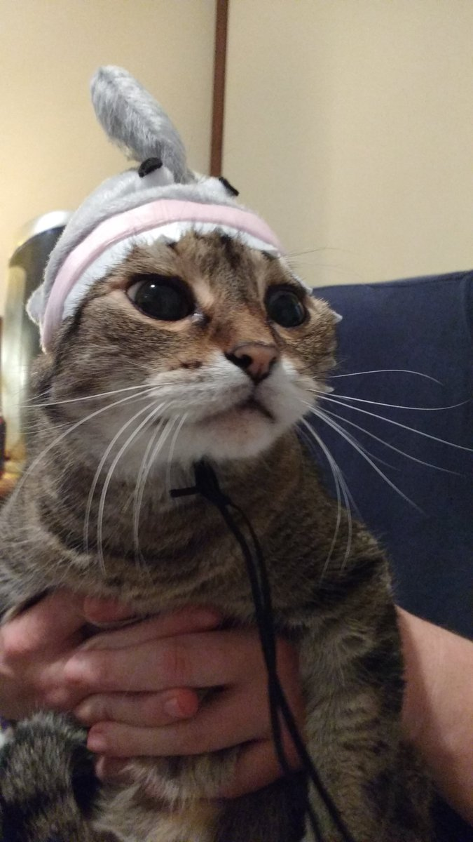 &quot;this is the worst day of my miserable life. I hate you.&quot; #hats #cats #Halloween #ennui <br>http://pic.twitter.com/0uDpPbCt0L