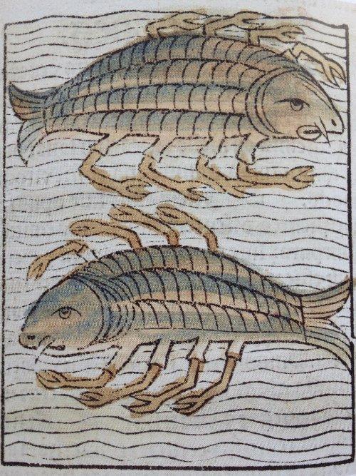 15世紀の自然史百科事典に載っているこの人たち、エビなの?魚なの?ステテコなの?と思ったらキャプションが「octopus」だった時の衝撃 #蛸の日 https://t.co/H1pI3vFh8M