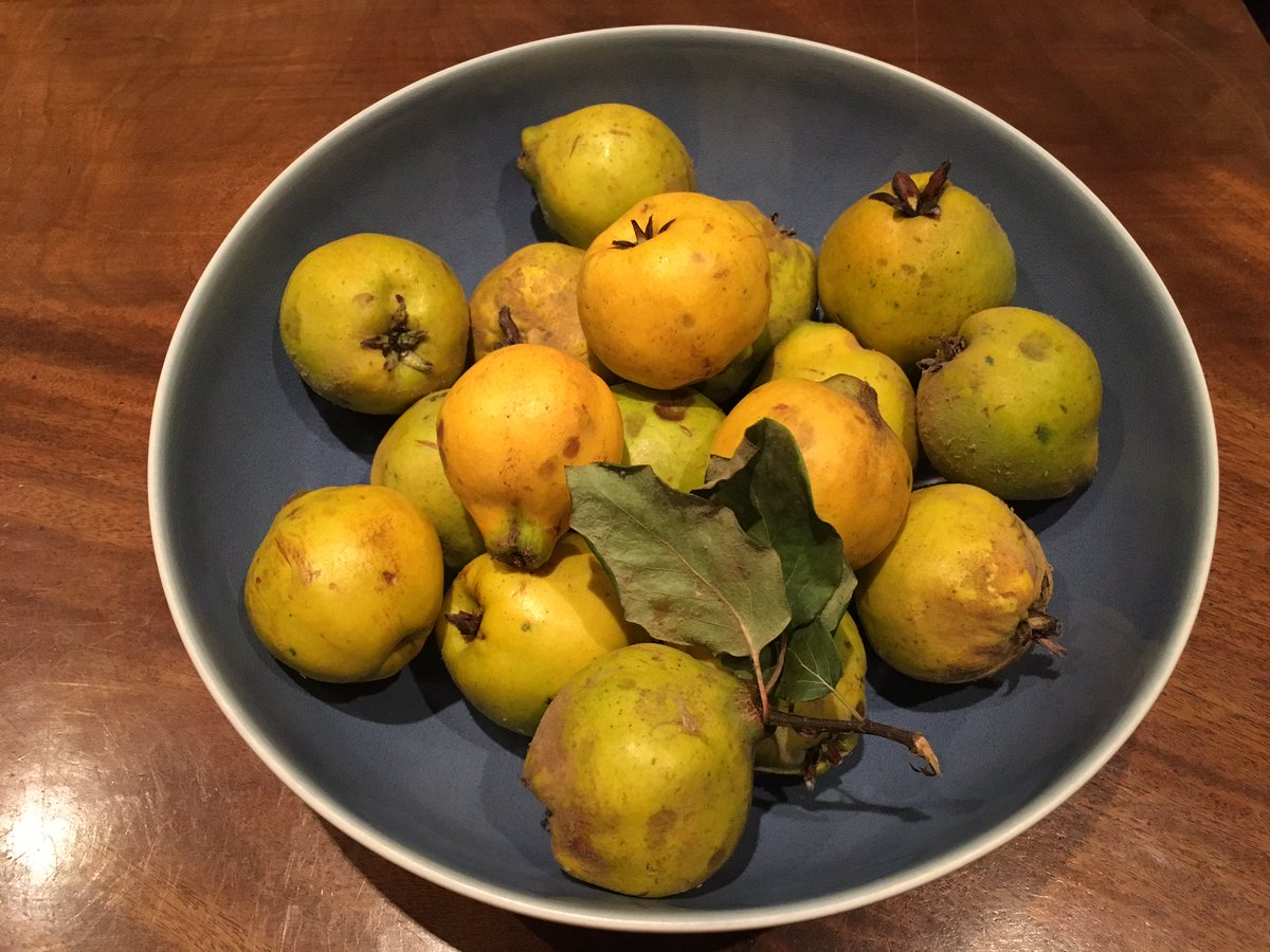Some gorgeous quince from one of our weekend picks #urbanharvest #fruit <br>http://pic.twitter.com/m6JBwuACQZ