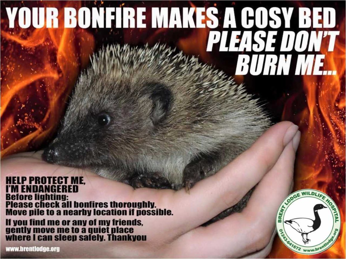 test Twitter Media - Please share this important #hedgehog message! #BonfireNight #5thnovember 🔥🔥💥💥 https://t.co/fSR4m2i8TJ