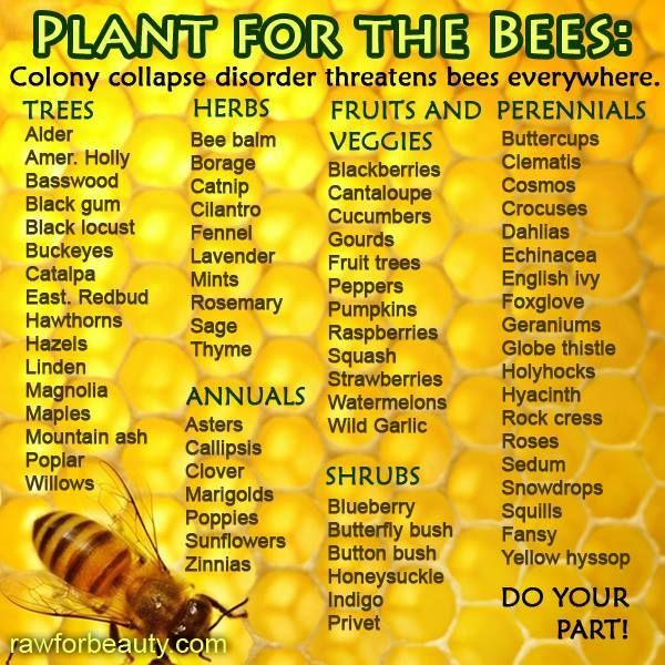 Farm Fairy Crafts On Twitter Save The Bees Plant Bee Friendly Plants Avoid Pesticides You Can Help Savebees