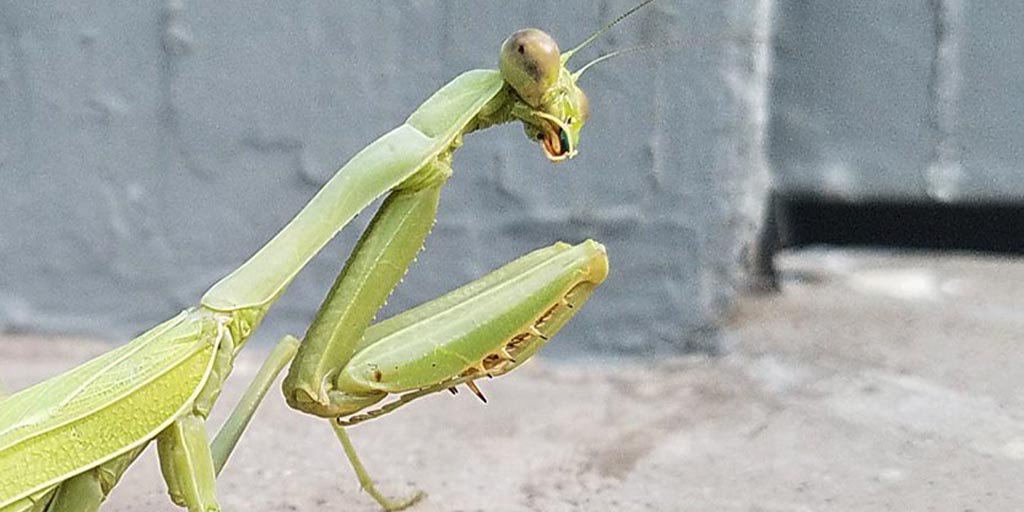 It&#39;s almost as if this praying mantis @SeminoleCanyon is giving us #thelook <br>http://pic.twitter.com/EFdJCBO1BH