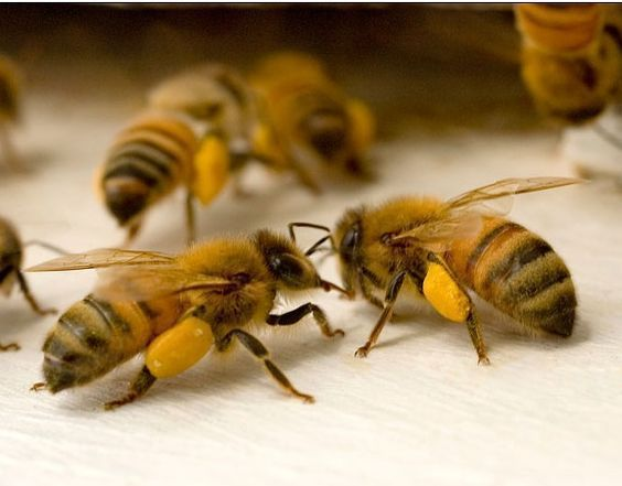 Risultati immagini per Ecological Armageddon' Warning Follows Dramatic Plunge in Insect Numbers