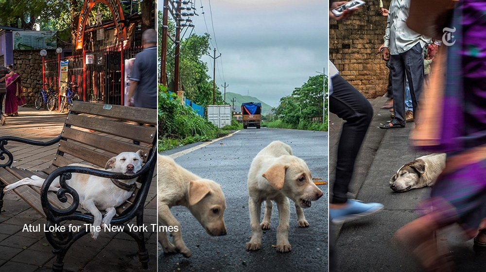 Mumbai turns out to be a pretty good place to be a dog. Watch our Instagram story: https://t.co/ekJzlvkx3Q https://t.co/AFhudLCVPQ