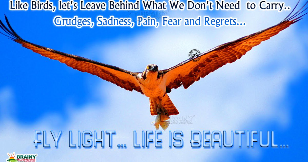 Brainyteluguquotes On Twitter Be Happy Ever Life Success Quotes In