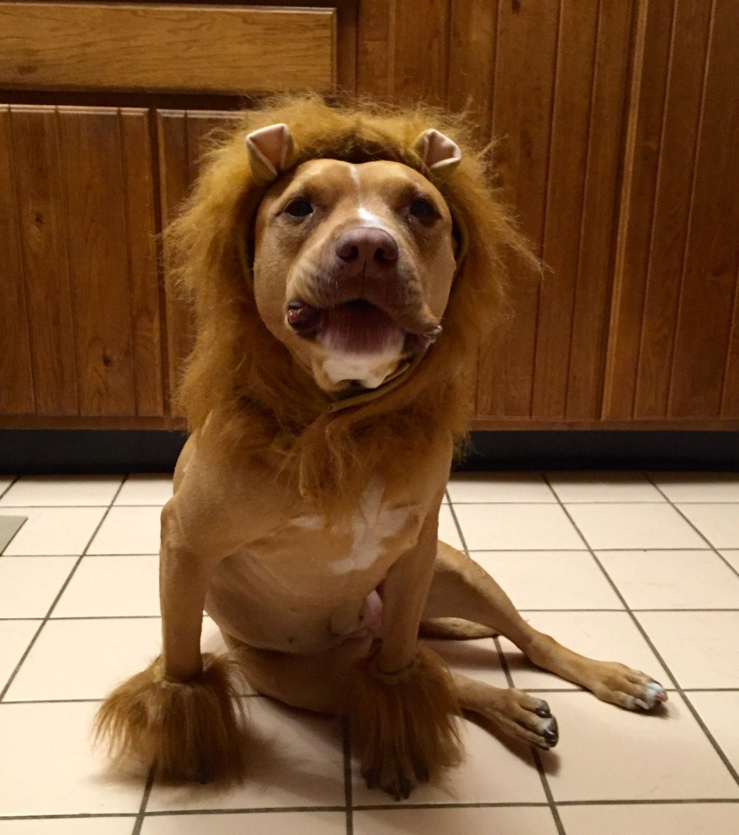 It's been a while since I showed off my pet lion. https://t.co/norbsjJIm5
