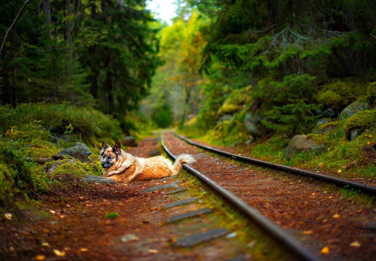 Naissaare raudtee