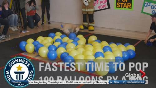 Global Calgary On Twitter Those Balloons Had No Chance Canine Guinness World Records Holder Toby At Global Calgary Watch Newss Online