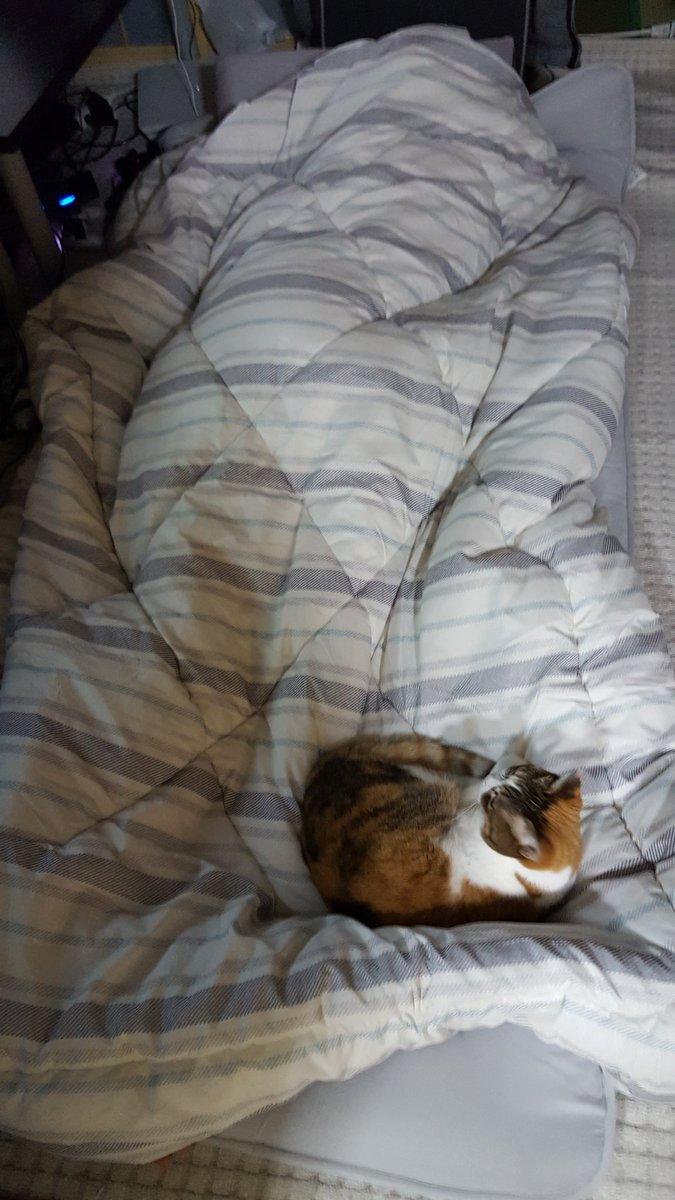 ミケ、なぜ西郷のところで寝る…僕の飼い猫なのに…