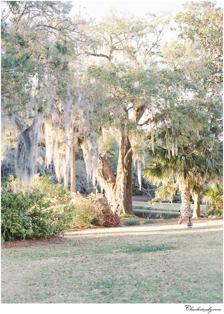 How many of these 8 live oaks have you visited in #Charleston?  http:// bit.ly/2xx9JTb  &nbsp;   #MondayMotivation<br>http://pic.twitter.com/WKjQqSHYdT
