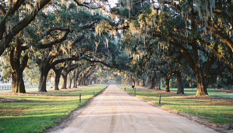 8 Spectacular Spots to See Live Oaks in #Charleston:  http:// bit.ly/2xx9JTb  &nbsp;   @Boone_Hall<br>http://pic.twitter.com/T4d2vG9x82