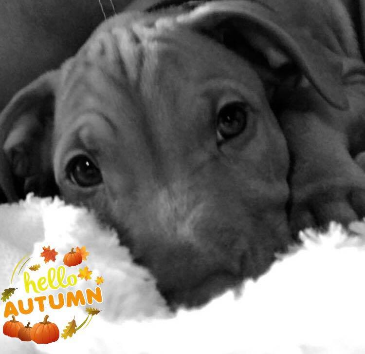 Who&#39;s excited for fall?!?! #Fall #seasons #HelloAutumn #puppy #puppymom<br>http://pic.twitter.com/oQ8rJyPibl